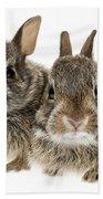 Two Baby Bunny Rabbits Beach Sheet