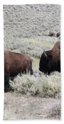 Two Bison Beach Towel