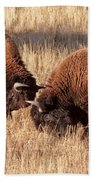 Two Bull Bison Facing Off In Yellowstone National Park Beach Towel