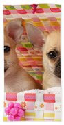 Two Chihuahuas Beach Towel by Greg Cuddiford