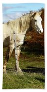 Two Children Admire Horses Beach Towel