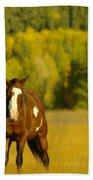 Two Horses Walking Along Beach Towel