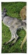 Two Lazy Kangaroos Lying Down Beach Towel