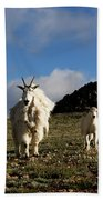 Two Mountain Goats Oreamnos Americanus Beach Towel
