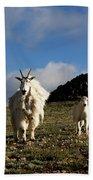 Two Mountain Goats Oreamnos Americanus Beach Sheet