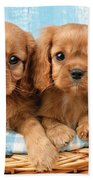 Two Puppies In Woven Basket Dp709 Beach Towel