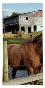 Two Quarter Horses In A Barnyard Beach Towel