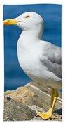 Two Seagull Beach Towel