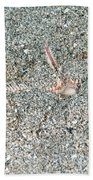 Two-spined Sea Star Beach Towel