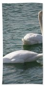 Two Swans A Swimming Beach Towel