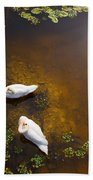 Two Swans With Sun Reflection On Shallow Water Beach Towel