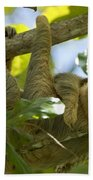 Two-toed Sloth Relaxing With A Grin Beach Towel