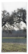 Two Tree Frosty Morning Beach Towel