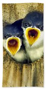 Two Tree Swallow Chicks Beach Towel