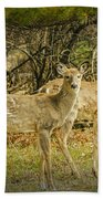 Two White Tailed Deer Beach Towel