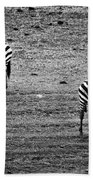 Two Zebras Eating. Tanzania Beach Towel
