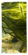 Underwater Shot Of Green Seaweed Attached To Rock Beach Towel
