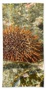 Underwater Shot Of Sea Urchin On Submerged Rocks Beach Towel