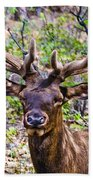 Up Close And Personal With An Elk Beach Towel