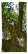 Up In The Trees Beach Towel