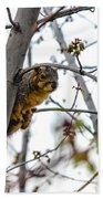 Up The Tree Beach Towel by Robert Bales