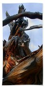 Uprooted Beauty Beach Towel by Shane Bechler