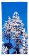 Usa, Oregon, Pine Trees, Winter Beach Towel