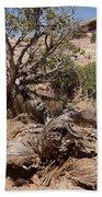 Utah Tree Beach Towel