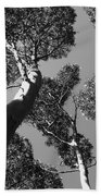 Valley Of The Giant Tingles Bw Beach Towel