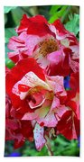 Variegated Multicolored English Roses Beach Towel