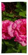 Variegated Roses Beach Towel