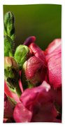 Variegated Snapdragon Beach Towel