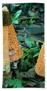 Veiled Lady Mushrooms Beach Towel by Glen Threlfo