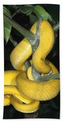 Vemonous Mcgregors Pit Viper Coiled Beach Towel