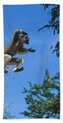 Verreaux's Sifaka Beach Towel