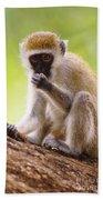 Vervet Monkey Beach Towel