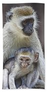 Vervet Monkeys Beach Towel