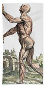 Vesalius: Muscles 02, 1543 Beach Towel
