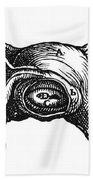 Vesalius: Uterus, 1543 Beach Towel