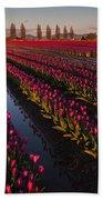 Vibrant Dusk Tulips Beach Towel