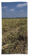 Vidalia Georgia Onion Fields Beach Towel