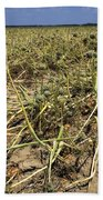 Vidalia Onion Seed Field - Georgia Beach Towel