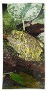 Vietnamese Mossy Frog Beach Towel