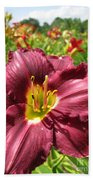 Viette's Daylily. Dark Purple 01 Beach Towel