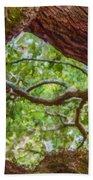 View Through Angel Oak Tree Beach Towel