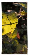 Vine Leaves At Sunset Beach Towel