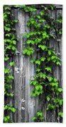 Vines On The Side Of A Barn Beach Towel