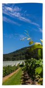 Vineyard's Companion Rose Beach Towel