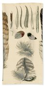 Vintage Feather Study-a Beach Towel