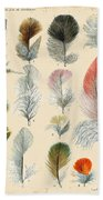 Vintage Feather Study-b Beach Towel